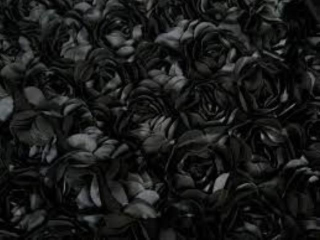 Where to find BD DRAPE-BLACK ROSETTE in Mentor